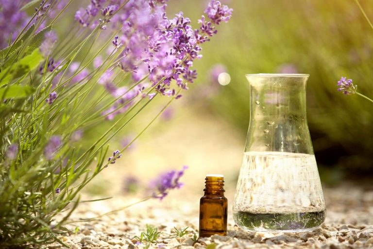 Lavender Oil Benefits for Hair and How to use it?