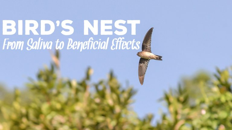 Bird's Nest: From Saliva to Beneficial Effects