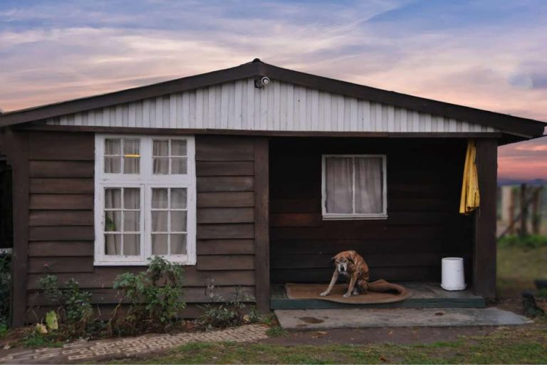 Pet Friendly Cabins In Georgia Offer Modern Home Comforts