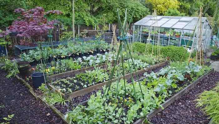 Best Tips How to Start and Maintain a Kitchen Garden