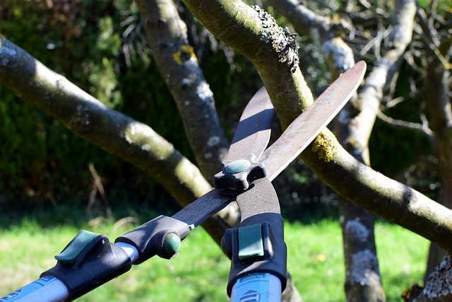 9 Tips to Prune Your Trees Efficiently